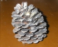 Rental store for 2.5 -3.5  Pine Cones in Auburn IN